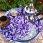 abde allah boutkhoum Profile Picture