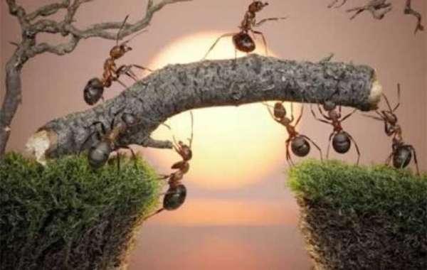 النملة التي بداخلك